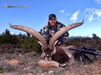 Beceite Ibex Hunt - Beceite Spanish Ibex