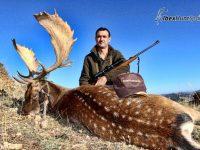 Spanish Fallow deer