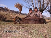 Fallo deer hunting in Spain