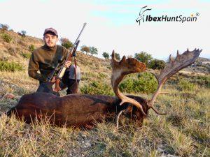 Fallow deer, Fallow deer hunt, Fallow deer hunting, Fallow deer hunting in Spain, Hunting Fallow deer in Spain,
