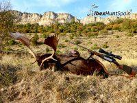 Blak Fallow seer, Blak Fallow deer hunting in Spain