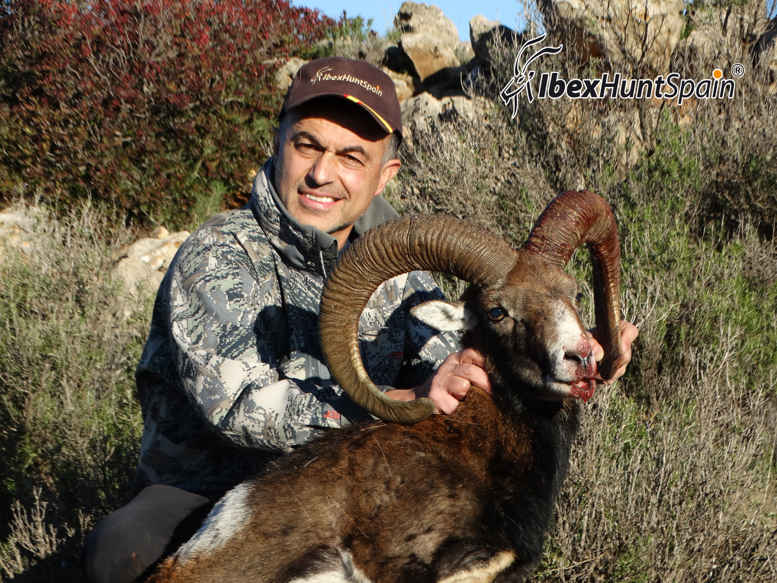 IBERIAN-MOUFLON-SHEEP-EUROPEAN-MOUFLON-2014 (4)
