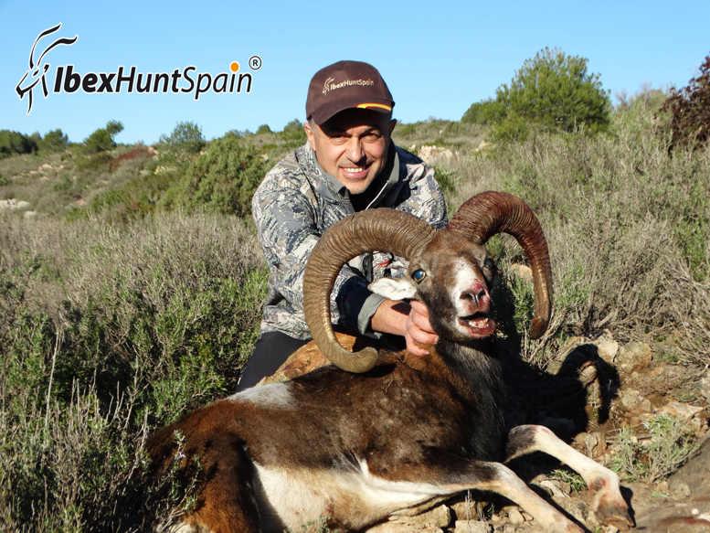 IBERIAN-MOUFLON-SHEEP-EUROPEAN-MOUFLON-2014 (6)