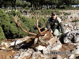 Iberian Red Deer, Red Stag, Iberian Red Deer hunt, Iberian Red deer hunting in Spain, hunting red stag in Spain, Red stag Hunting in Spain