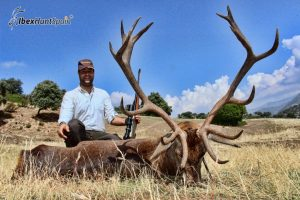 Red Stag hunt in Spain