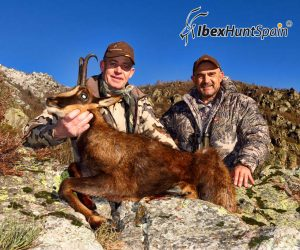 Pyrenean Chamois hunting
