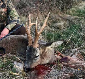 Roe deer hunt