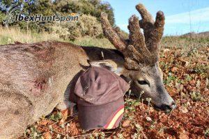 Roe deer hunting