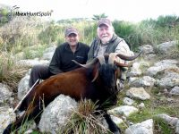 Balearean boc hunt, Balearean goat hunt