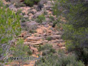 Barbary sheep hunt / aoudat hunt
