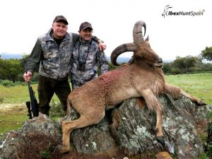 audad sheep hunt, barbary sheep hunt