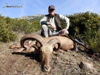 audad sheep hunt, barbary sheep hunt
