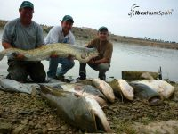 Catfish fishing in Ebro