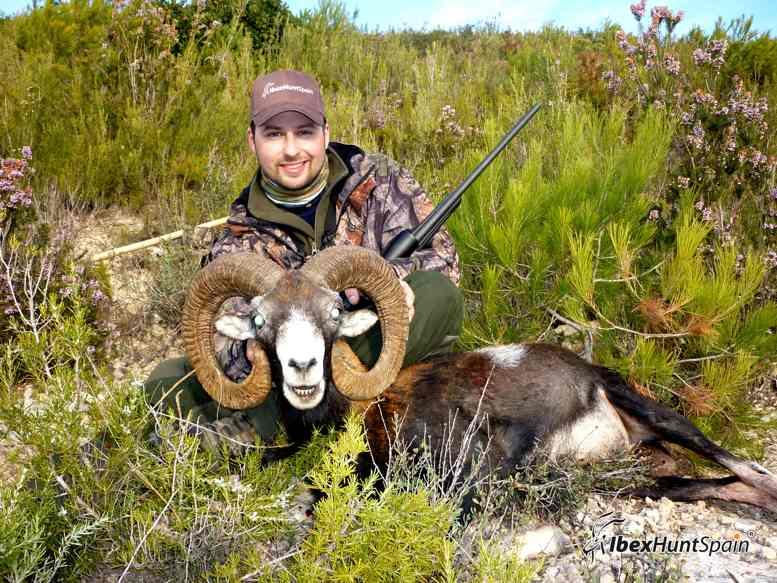 Iberian mouflon hunt, european mouflon hunt