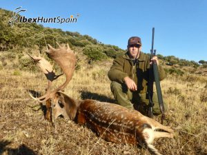 Black Fallow deer, Black Fallow deer hunting in Spain, Black Fallow deer hunt