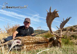 Black Fallow deer, Black Fallow deer hunting in Spain, Black Fallow deer hunt