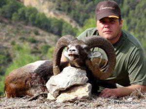 Iberian Mouflon, Iberian Mouflon Hunt, Iberian Mouflon Hunting, Iberian Mouflon Hunting in Spain, European Mouflon, Hunting Mouflon in Spain