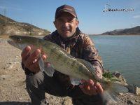 Zander fishing in Ebro