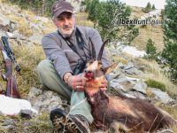 Pyrenean Chamois hunting