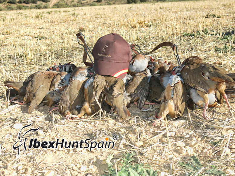 Red-Legged Partridge Driven Shooting in Spain | Ibex Hunt Spain